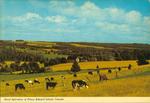 Rural Scenes in Prince Edward Island