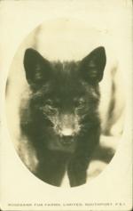 P.E.I. Foxes