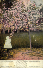 Apple Blossoms, Prince Edward Island