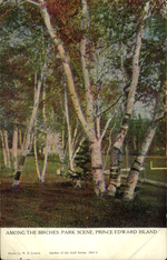 Among the Birches, Park Scene, Prince Edward Island.