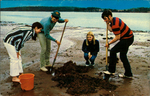 Clam Digging; Dig we must!
