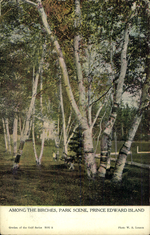 Among the Birches, Park Scene, Prince Edward Island
